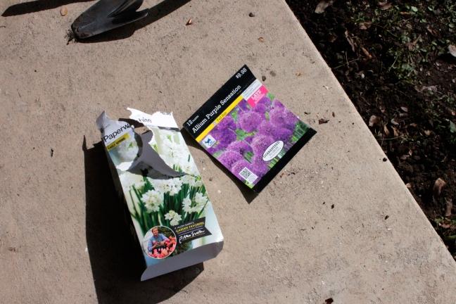 PlantingAllium